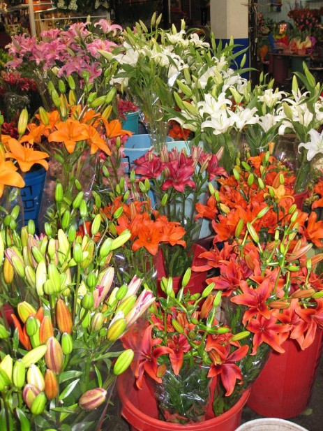jamaica-lilies