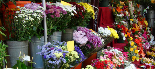 STOCK_flower_540x242